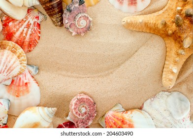 summer background.closeup shell on sandy beach  with place for your text