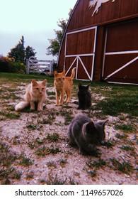 summer barn cats