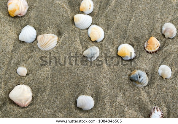 Summer beach background and closeup image of sea shells on sand