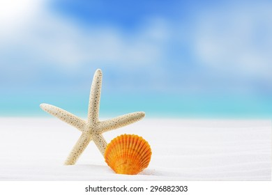 Summer and Beach Concept. Sandy Beach with Various Shell And Starfish