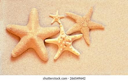 Summer beach. Family of Starfish on the sand