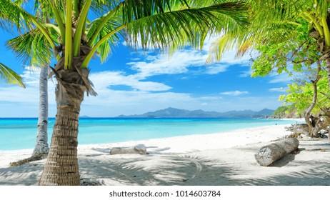 summer beach Palm Trees