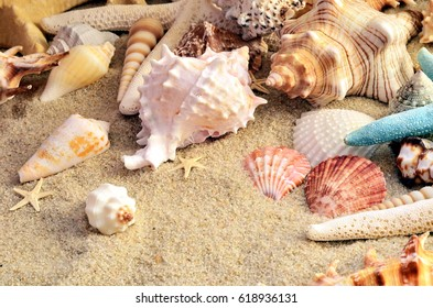 Summer beach. Sea shell on the sand. Top view.