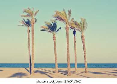 Summer beach with six palms on a late afternoon, before sunset. Filtered image in faded, washed-out, retro style; summer vintage concept.