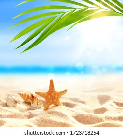 Summer beach with starfish and seashell in white sand and tropical palm leaf.