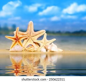 Summer beach. Starfish and shells on the seashore.