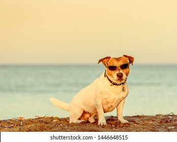 Summer beach vacation concept with dog wearing sunglasses sitting on sand