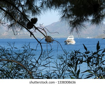 Summer beach, view to the sea through the pine branches with cones. White boat in the bay against mountainous coast, scenic seascape, vacation and travel concept