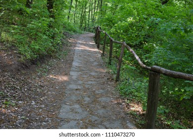 Summer beautiful forest. The stone path with a wooden barrier is