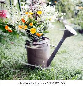 Summer beautiful garden with  flowers