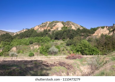 Summer beautiful landscape. The pine forest in the slope of the clay hill.