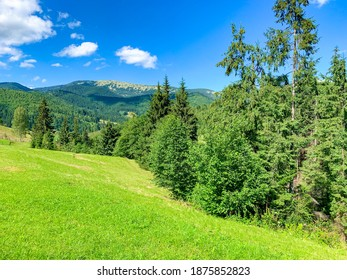 summer beautiful mountains village landscape with buildings and fields near of the forest