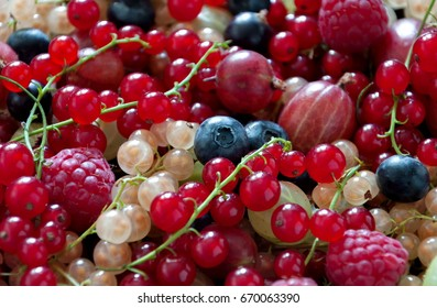 Summer berries background. Close-up of a colorful assortment of berries, currants, gooseberries, raspberries, red and white currants, blueberries. Top view.