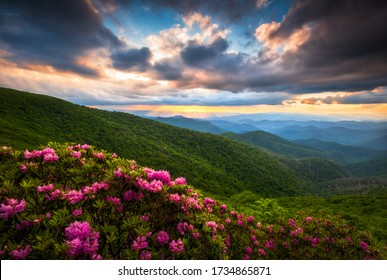 Summer blooms in the Appalachian mountains under a sunset sky near Craggy Gardens along the Blue Ridge Parkway above Asheville, NC in the scenic Southern Appalachians during he spring flower bloom.