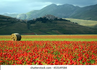 summer blooms plain of Castelluccio Mountains National Park Sibillini Umbria