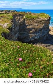 Summer blossoming Atlantic coastline landscape with pink flowers (near Los Castros beach, Galicia, Spain).