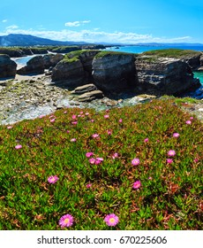 Summer blossoming Atlantic coastline landscape with pink flowers (Islas beach, Spain). Two shots stitch image.