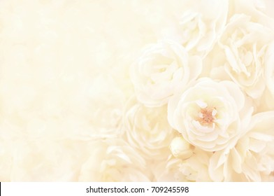 Summer blossoming delicate roses, blooming flowers festive background, pastel and soft floral card, selective focus, toned
