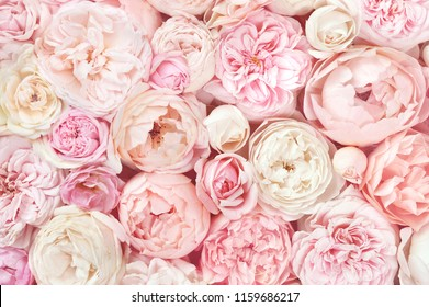 Summer blossoming delicate roses on blooming flowers festive background, pastel and soft bouquet floral card - Shutterstock ID 1159686217