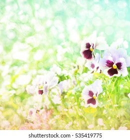 Summer blossoming pansy (viola), selective focus, shallow DOF, toned, light and heart bokeh background, pastel and soft card