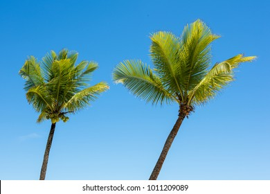 Summer blue day and two coconut trees