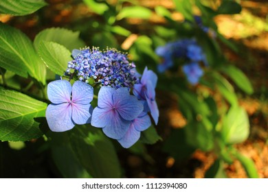 summer blue flower