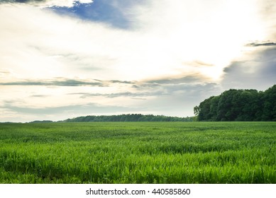 Summer blue sky. Nature landscape. Meadow with green grass, plants. Sunny spring scene.Rural outdoor countryside beautiful agriculture background with pasture, lawn, clouds.