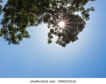 summer blue sky sun beams with tree branches high above at rural countryside of south germany