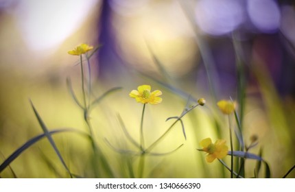 Summer Blurred abstract background with yellow colors of a buttercup.