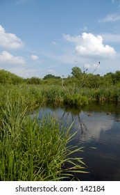 Summer bog