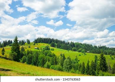 Summer Carpathian Moountains. Beautiful Landscape