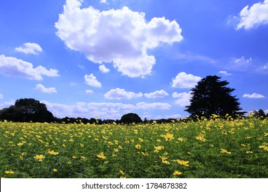Summer clouds moving over the yellow flower field