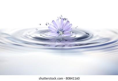 Summer concept. Beautiful blue wild flower in splashing water