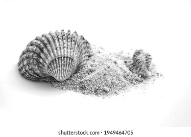 Summer concept : shells and sand isolated on white