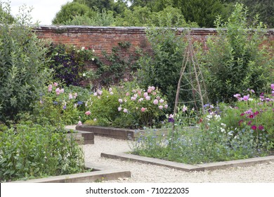 Summer cottage garden with pink roses, colorful sweet peas and other flowers by a brick wall covered by purple clematis and rosebush .