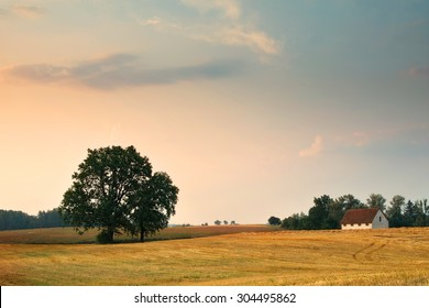 Summer countryside landscape. Oaks growing on the stubble.