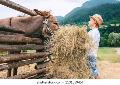 Summer in countryside: little boy helps on farm with animal