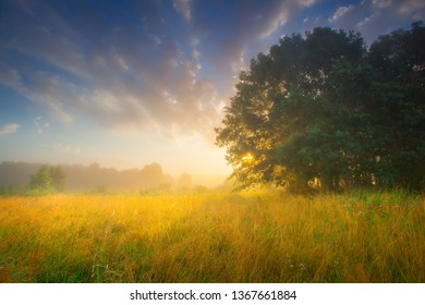 Summer. Summer dawn. Summer background. Sunrise with colorful sky. Meadow with wild plants.