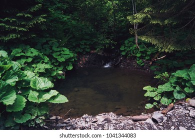 A summer day in a mountain forest in the Carpathians.