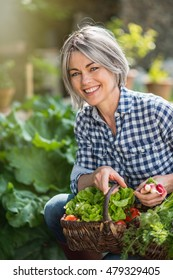 a summer day, a woman with gray hairs is in her garden, she picks vegetables: tomatoes, radishes, lettuce. she wears a shirt. she is happy, she's smiling. she 's squating down