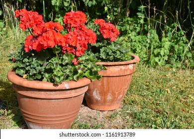 Summer decorations with red pelargonia flowers in flower pots in the backyard