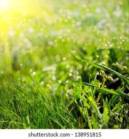 summer drops on the green grass