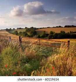 Summer evening, Cranborne Chase, Dorset, UK