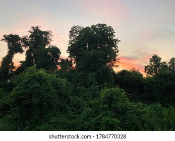 Summer Evening in Forest at Sunset