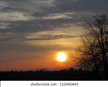 Summer evening, the sun and the sky is a calm and beautiful evening, the branches of the tree are dark and opposite to the sun, yellow black sky