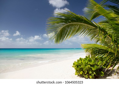 Summer. Exotic vacations. Palm trees. Turquoise water. Sunny blue sky. Beautiful white-sand beach.