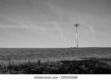 Summer field in black and white