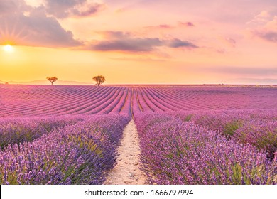 Summer field with blooming lavender flowers against the sunset sky. Beautiful nature landscape, vacation background, famous travel destination. Picturesque nature view, bright sunset sunrise, Provence