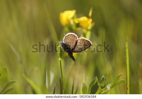Summer field butterfly