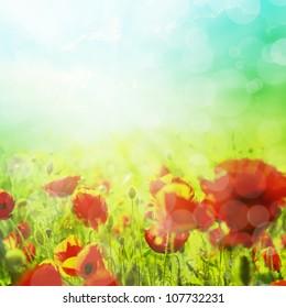Summer field of corn poppy flowers with bokeh